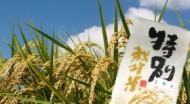 木酢米キヌヒカリ